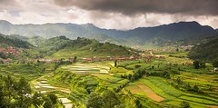 Valleys of Paddy Fields