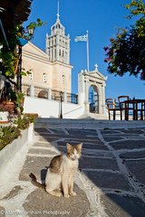 A cat and The Church of Agia Triada (Holy Trinity) (Garnham Photography) Tags: church animal architecture cat religious greek feline europe mediterranean religion historic greece greekislands orthodox paros byzantine cyclades touristattractions holytrinity whitewashed lefkes placeofworship aegeansea traveldestinations touristdestination religiousbuilding builtstructure thechurchofagiatriada