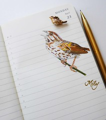Sparrow / Gorrin (Milagritos9) Tags: sparrow songbird birdportrait birdillustration illustratedjournal birdjournal inspirationaljournal dibujogorrin moleskineartpages moleskinebirdproject moleskinebirdsjournal moleskinediary2013 milagritosflores