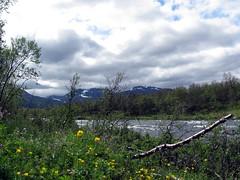 lapland_023 (rhomboederrippel) Tags: rhomboederrippel lapland holiday canon is120sx summer 2013 june sweden abisko nationalpark kungsleden flowers scandinavia europe river