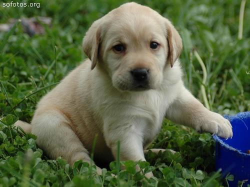 Filhotes de cachorros 29