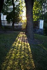Rays of a sunset (Toinen Linja) Tags: park light sunset sun grass finland evening helsinki ray dusk lawn thtitorninmki