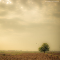 Vintage (Arjun Chhabra | Photography & Art) Tags: blue trees light sky tree green art beauty silhouette sepia clouds canon vintage landscape photography eos prime scenery raw arte dynamic fineart nostalgia greenery 40mm dslr drama efs ef lr arjun lightroom photshop 6d finearts chhabra jharkhand canonraw cr2 ranchi primelens canonphotography sureeal canon6d sunhdr photomatixadobe canonef40mmf28 arjunchhabra pancakeslr cs5photoart fineindia