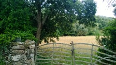 Son Camar (Menorca) (guidaalles) Tags: menorca paisatge barreres