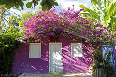 Casa Vitria em Trancoso (marcelo nacinovic) Tags: pictures pink brazil espelho arquitetura brasil architecture canon photography