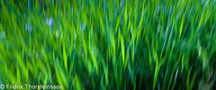 Green (Fridrikalfur) Tags: green moving iceland icm intentionalcameramovement