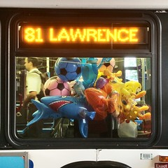 The inflatable 81 Lawrence bus (spudart) Tags: fish chicago bus window balloons shark weird crazy cta inflatable 81 tweetybird ctabus lawrenceavenue 3780 inflatableshark balloontoys 81lawrence inflatablefish 81bus ctabusstop3780 inflatabletweety