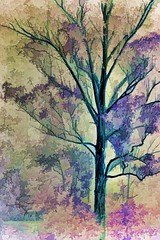 From Winter to Summer (loobyloo55) Tags: pink brown tree green purple cream australia