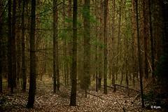 State of Mind/...I don't know... (Kym.) Tags: wood tree green walking walk thenetherlands stateofmind gelderland lochem