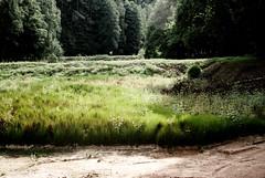- (christie.rainey) Tags: wood trees lake tree nature grass fairytale forest landscape pond woods scenery natur htte wiese hut mystical gras magical landschaft wald mrchen weiher mrchenwald fairytaleforest grasland sceneryporn