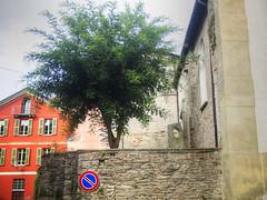 SSBelbo2014__P7192371 copia (stegdino) Tags: tree sign cartello albero segnale divieto