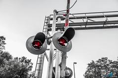 Railroad Lights (dbubis) Tags: railroad bw train tampa lights florida fl bubis westchase dbphoto