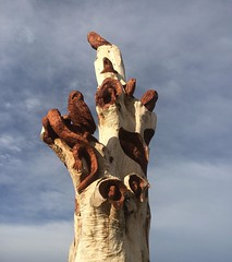 (katiebell82) Tags: trees newzealand art southisland omaru carvings