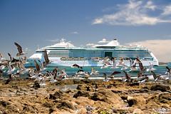 Cruceros I