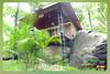 Silent Valley---------------41 (Binoy Marickal) Tags: india green tourism nature water rain kerala mala palakkad evergreenforest treaking silentvalleynationalpark nilgirihills mannarkkad mukkali kuzhur indiabinoymarickal