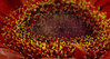 flowers (NAWAF AL HAMIDI) Tags: flowers macro canon wow photo nice pic splash mypic ورد صورة الوان عدستي صوري تصويري السعودية قطرات ماكرو كانون مصورين الطائف سبلاش تراقص غردبصورة الناسالرايئه ahdphoto anstaqram