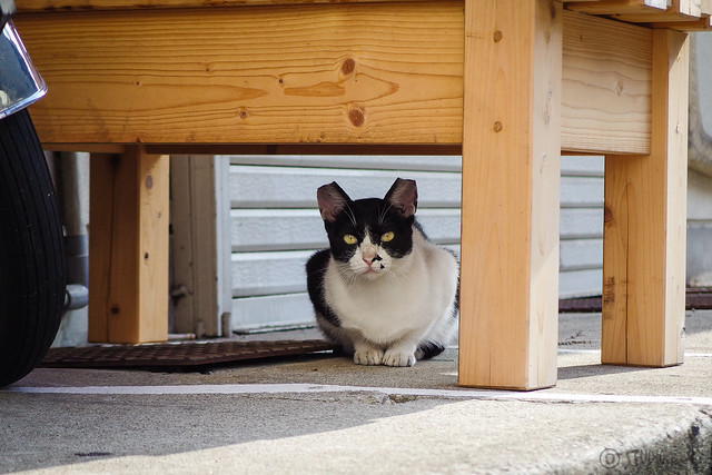 Today's Cat@2014-09-06