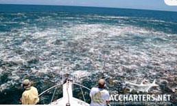 Amelia Island fishing charters