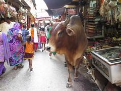 """Dans le bazar d'Haridwar <a style=""""margin-left:10px; font-size:0.8em;"""" href=""""http://www.flickr.com/photos/83080376@N03/15021022965/"""" target=""""_blank"""">@flickr</a>"""