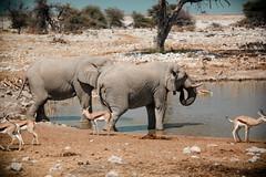 Namibia-2656 (Francesca Braghetta) Tags: africa travel desert dunes lion namibia viaggi travelblog etosha himba namib avventure viaggiare avventurenelmondo viaggiavventurenelmondo sussveil inviaggioconfrancesca