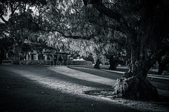 A Walk in the Park (Coxy from Aus) Tags: canon rebel kitlens perth wa 1855mm kingspark westernaustralia xti 400d
