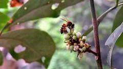 img_131 - Don-Wai (dekudom) Tags: colour nature southeastasia bokeh siam marketgarden donwai stefjon
