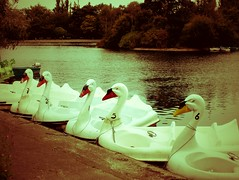 Swans in Waiting (John of Witney) Tags: boats gateshead swans tyneandwear saltwellpark parklake