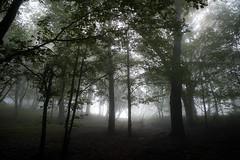 ticino fog situation (Toni_V) Tags: wood mist fog forest schweiz switzerland tessin ticino europe nebel suisse hiking 28mm rangefinder svizzera wald wanderung m9 2014 svizra elmaritm messsucher ©toniv leicam9 140920 digaverzascasassarientebellinzona l1018799