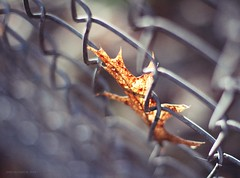 (rafalweb (moved)) Tags: autumn sunlight fall canon fence eos 50mm leaf focus bokeh 14 7d ef