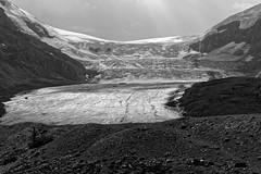 Athabasca glacier (bichane) Tags: park bw white canada black jasper columbia glacier national alberta parkway 93 icefields athabasca icefield