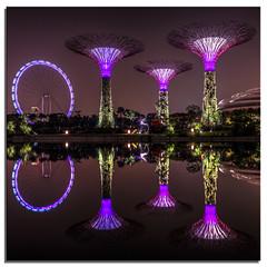 Singapore 8111 (.Wadders) Tags: water garden singapore ngc d600 2013 gardensbythebay nikkor1635mmf4 nikonfxshowcase