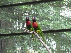 "Bird Park <a style=""margin-left:10px; font-size:0.8em;"" href=""http://www.flickr.com/photos/83080376@N03/15365030892/"" target=""_blank"">@flickr</a>"