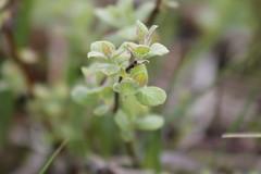 soft (Aniemar) Tags: green canon garden scotland pflanzen grn garten schottland
