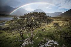 Loch Slapin Rainbow (amcgdesigns) Tags: skye isleofskye torrin lochslapin blaven blabheinn atmospheric eos7dmk2 canon1022mm rainbow tree hawthorn twisty cloudsstormssunsetssunrises