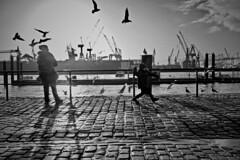 Feeding .2. (HansEckart) Tags: gegenlicht möven streetfotografie stadt hafen urban hamburg schwarzweis bw