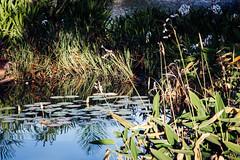 Jardim da Casa do Baile (Johnny Photofucker) Tags: pampulha casadobaile minasgerais mg belohorizonte bh jardinagem jardim giardino garden plantas planta pianta lightroom paisagismo