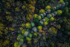 First Flight (Mark McLeod 80) Tags: australia ballarat dji drone markmcleod phantom4pro vic aerial trees markmcleodphotography