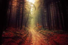 Darkest Light II. (Zsolt Zsigmond) Tags: forest trees woods autumn fall fog mist light path nature landscape