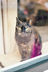 Cat in a window. (carolinezy) Tags: animal kat poes raam kozijn vensterbank huis window netherlands nederland noordholland noord holland alkmaar