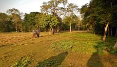 """NEPAL, Royal Chitwan-Nationalpark, Elefanten-Safari, 15402/8183 (roba66) Tags: elefanten elephants elefantencamp safari fotosafari elefantensafari reisen travel explore voyages roba66 visit urlaub nepal asien asia südasien """"royal chitwannationalpark"""" nationalpark landschaft landscape paisaje nature natur naturalezza tier tiere animal animals creature"""