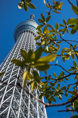 Tokyo Skytree (julesnene) Tags: 634meters canon7dmark2 canon7dmarkii canonef35mmf14lusmlens japan juliasumangil tokyo broadcasting city destination julesnene observationdeck observationviews placestovisit restaurant secondtallesttowerintheworld structure tallest top tourism tower travel sumidaku tōkyōto jp