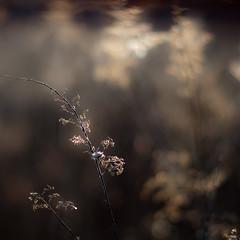 Wetland Prairie Landscape 016 (noahbw) Tags: d5000 dof nikon prairiewolfsloughforestpreserve abstract blur bokeh depthoffield landscape light marshland natural noahbw prairie square sunlight wetlands winter