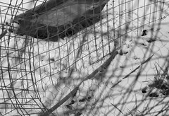A messy fence (mennomenno.) Tags: hekken fences rommelig mess hff sneeuw snow