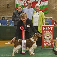 Best in Show (evinrisca) Tags: welshspringerspaniel wales chepstow championship dogshow welshie spaniel champshow