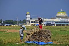 DSC_5969 (THUNISLFY) Tags: padi sawah localpeople humaninterest aceh phui acehbesar