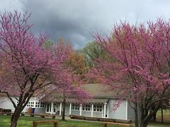 Subtle colors of spring, Leesylvania State Park, Woodbridge, Virginia (judygva) Tags: