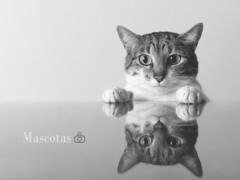 Pets (Troylo@stur) Tags: pet pets cat gato gata blancoynegro byn bw blackwhite