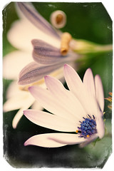 Summer Spirit (shoot it!) Tags: flowers flower macro yellow closeup photoshop canon dof may filter mei f28 bloemen bloem macrolens 2014 shallowfocus deptoffield smalldof scherptediepte canon400d alienskinsoftware canonmacrolensef100mm128usm photoshopcs5 alienskinexposure5 mei2014