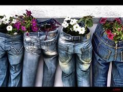 "Jean Genie (CJS*64 ""Man with a camera"") Tags: flowers holiday nikon pants santorini greece jeans cjs d3100 nikond3100 craigsunter cjs64"
