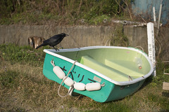 Sailor (Igor Voller) Tags: flowers blue brown sunlight white black green grass japan wall boat bottle bush violet dry rope shore  crow shimoda